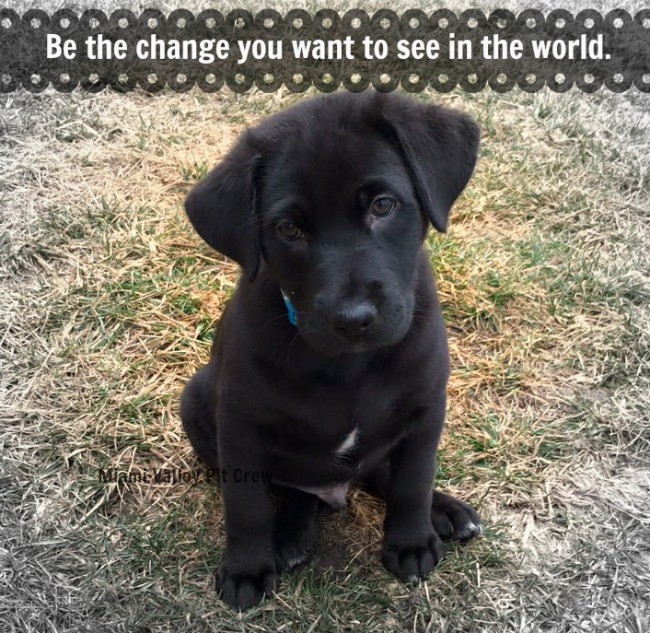 adorable black GSD puppy asking for donations