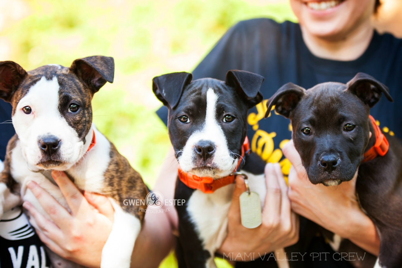 adoptable dogs on Pet Finder for Miami Valley Pit Crew