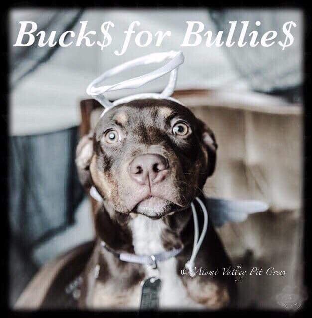 Bucks for Bullies logo